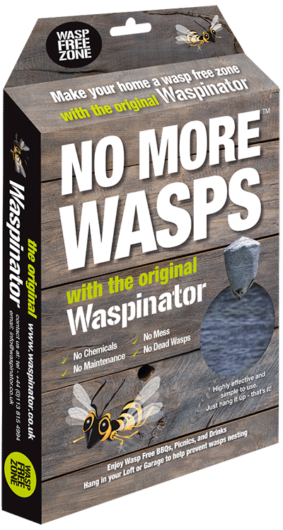 What do wasps eat? It changes according to the time of year. Wasp grubs need a…